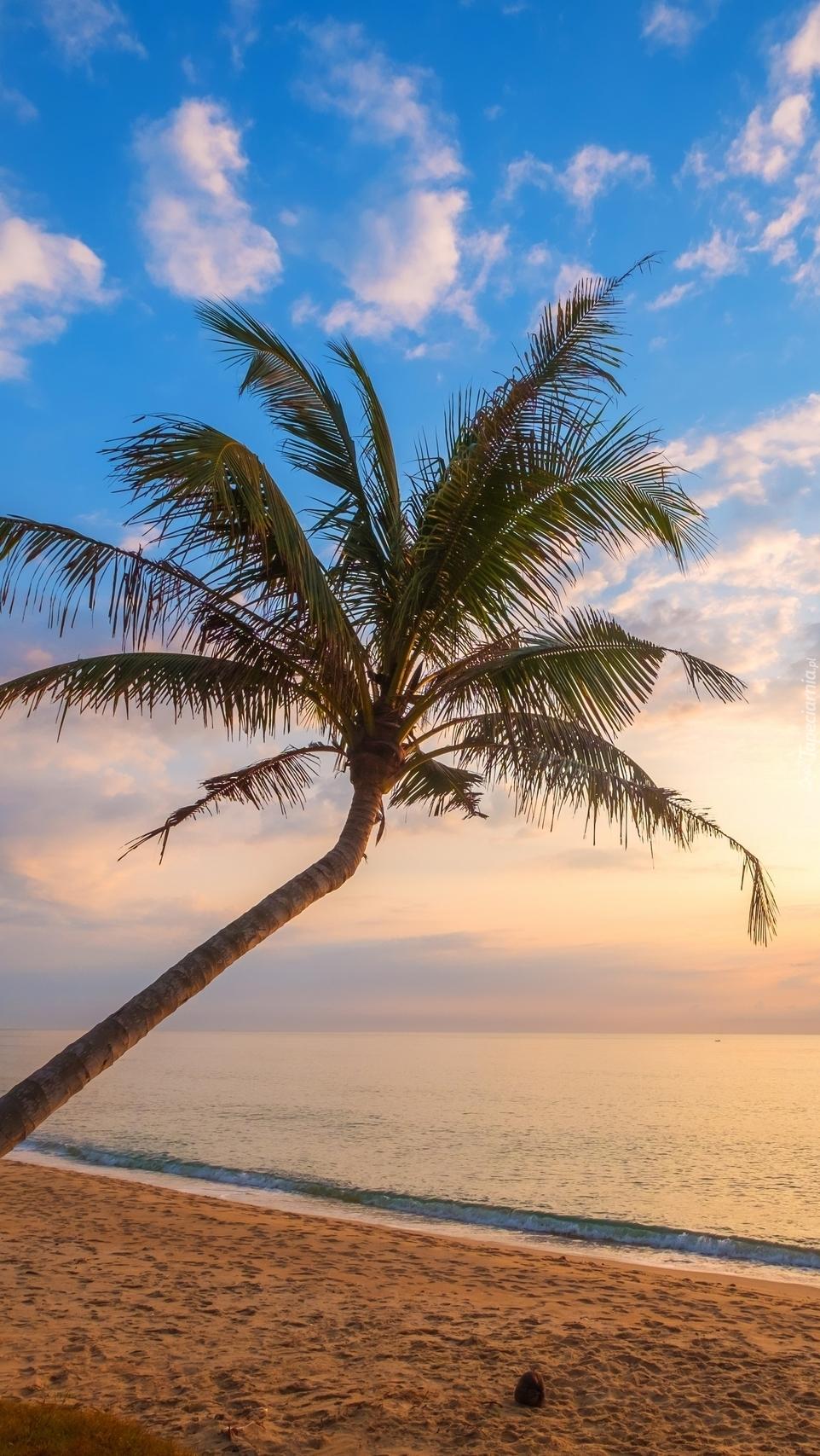 Pochylona palma na plaży
