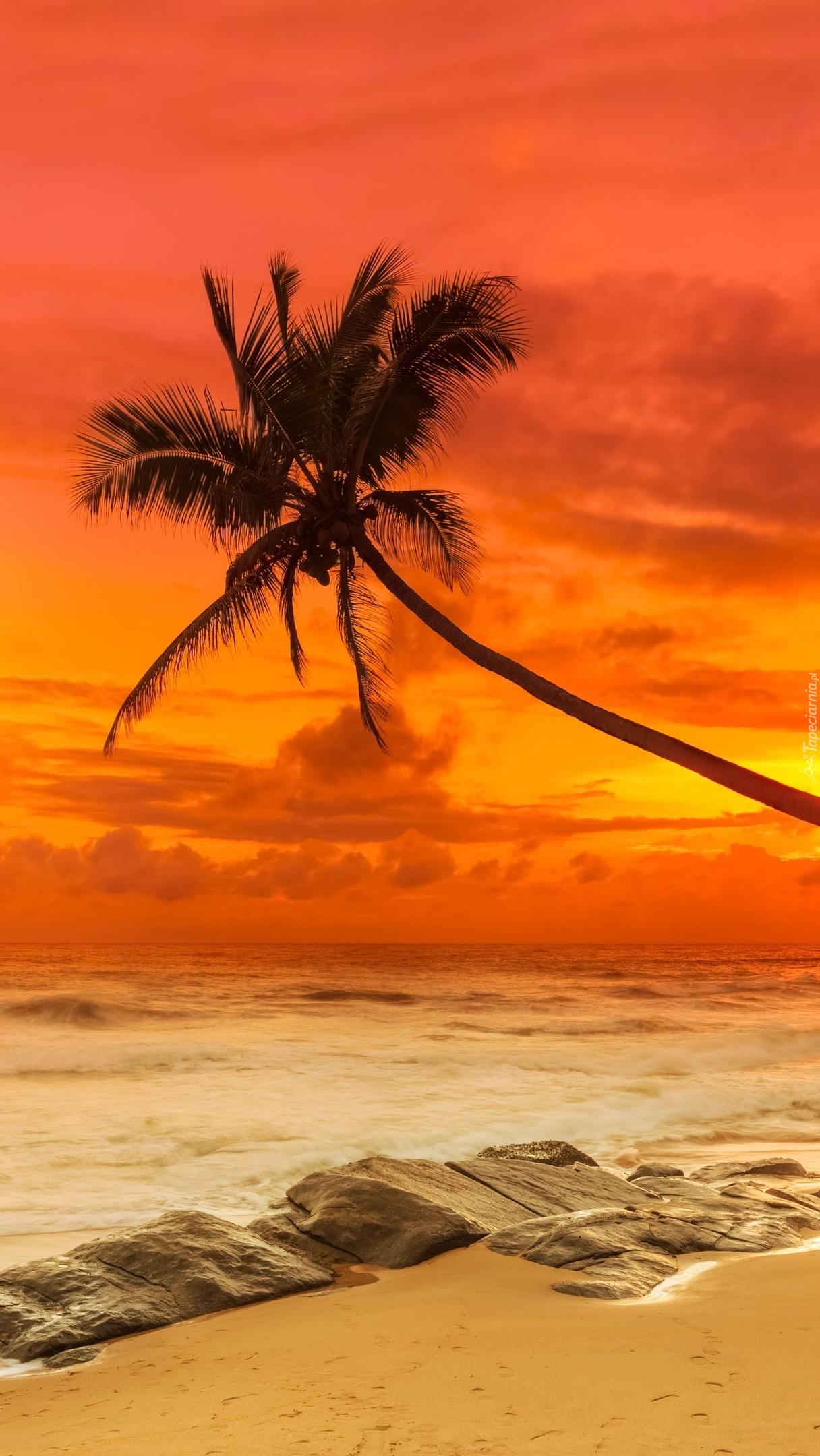 Pochylona palma nad morzem