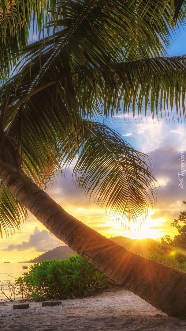 Pochylona palma w słońcu