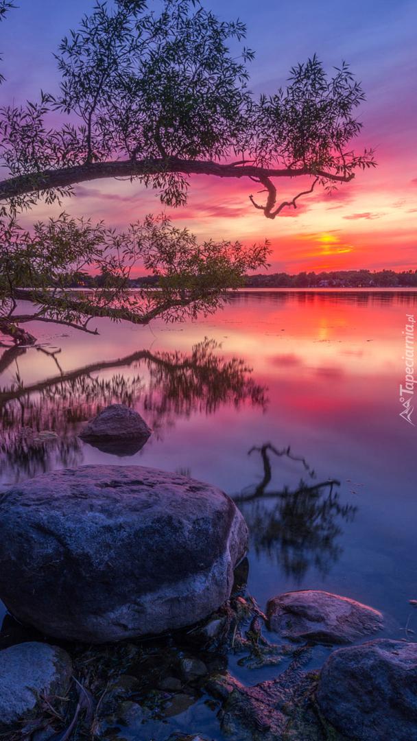 Pochylone drzewa nad jeziorem