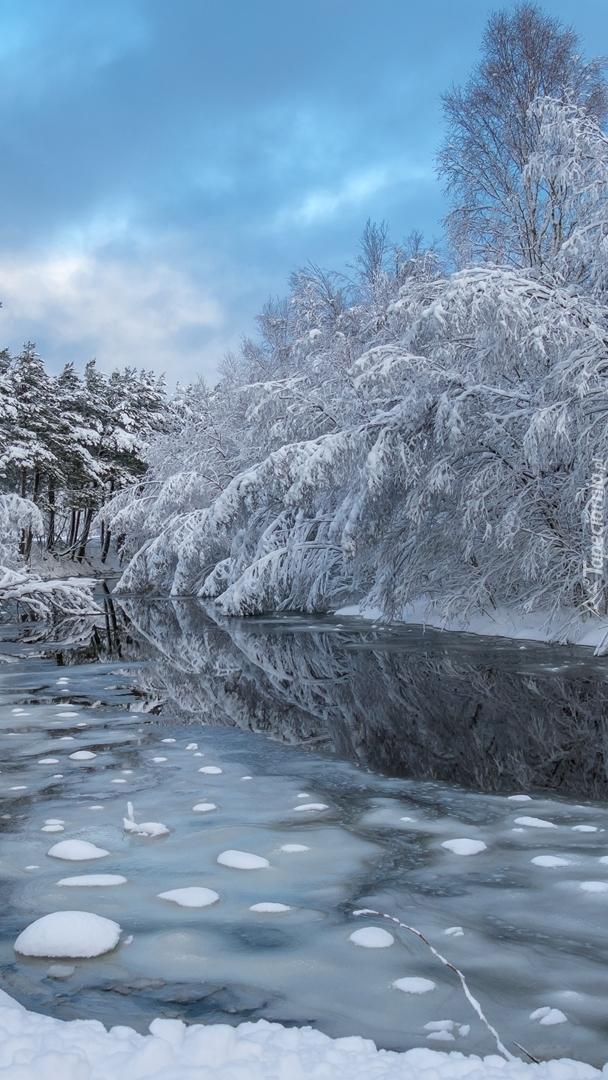Pochylone drzewa nad rzeką