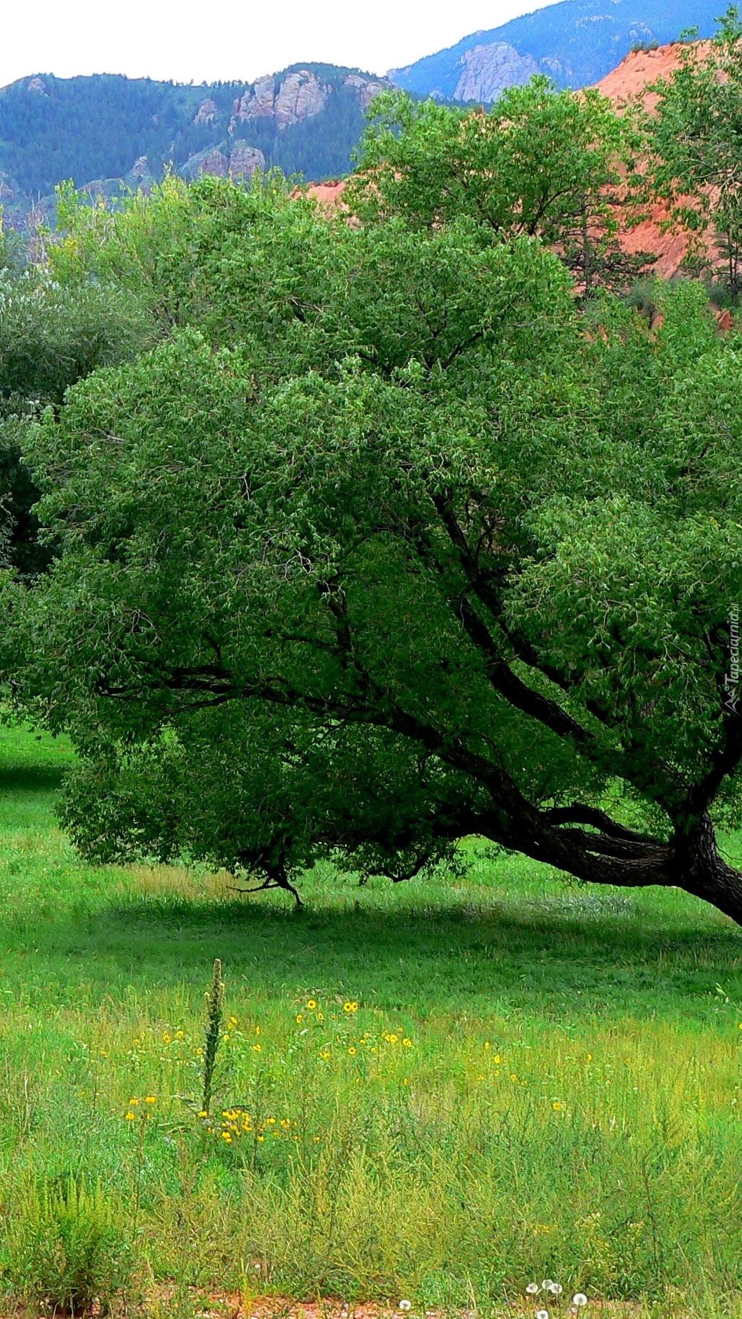 Pochylone drzewo