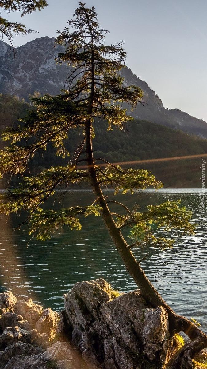 Pochylone drzewo nad jeziorem