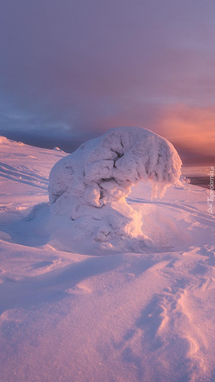 Pochylone drzewo pod ciężarem śniegu