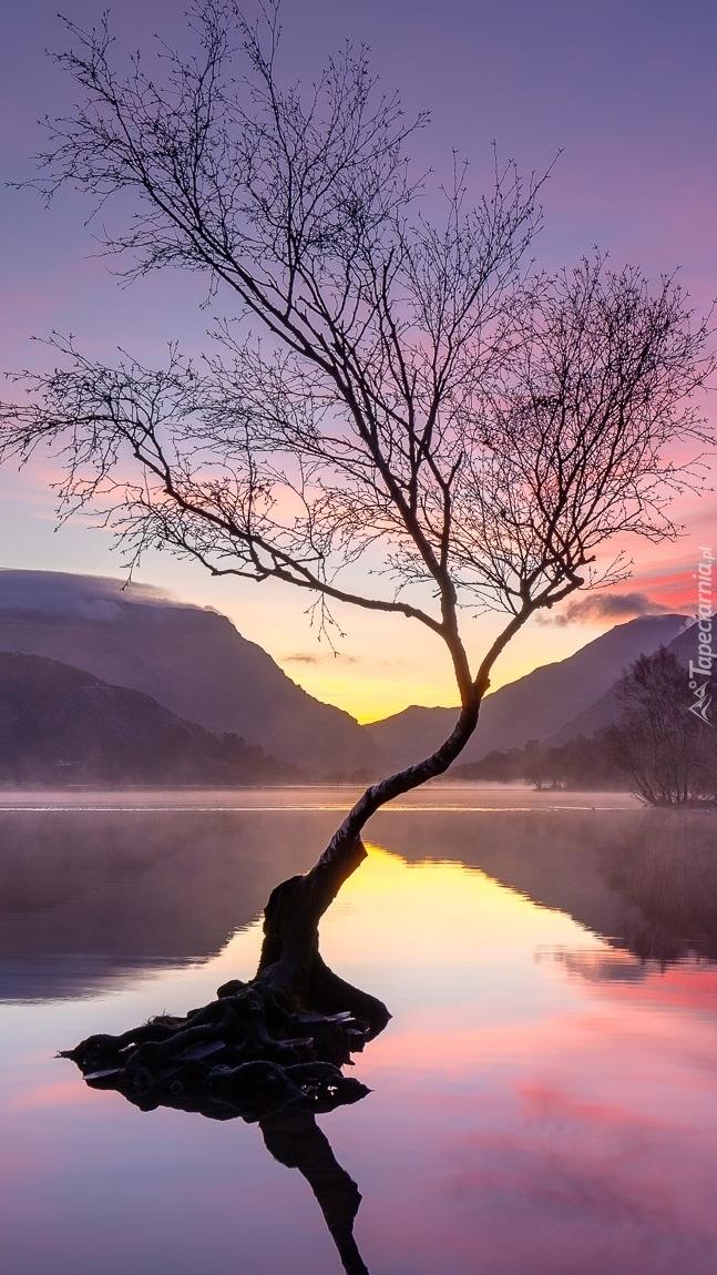 Pochylone drzewo w jeziorze