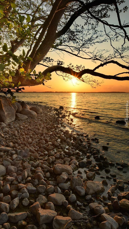 Pochylone gałęzie nad brzegiem jeziora