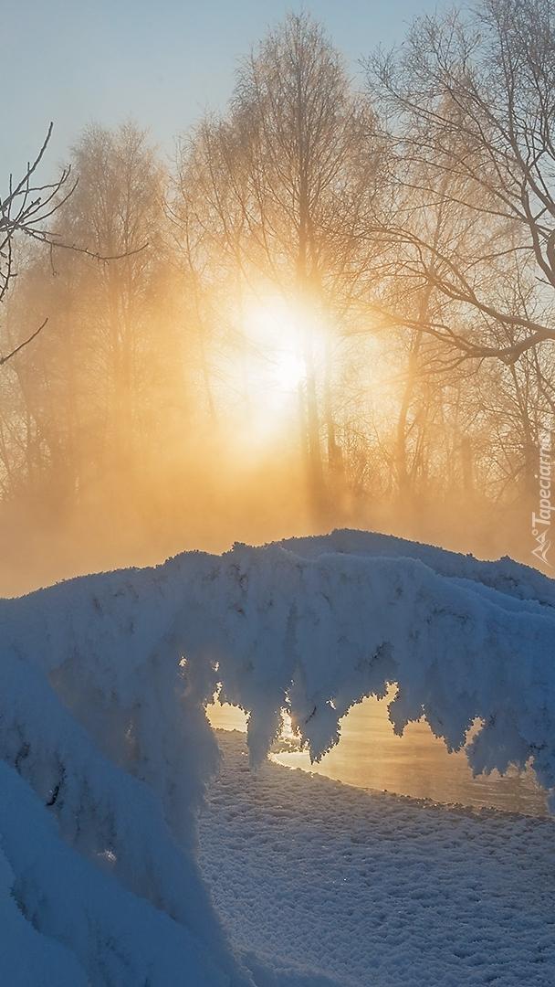 Pochylone gałęzie pod śniegiem