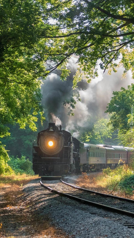 Pociąg parowy w lesie