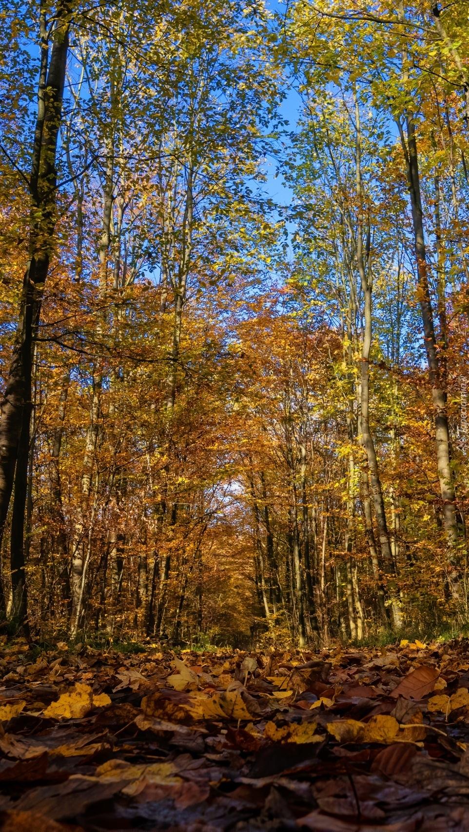 Pogodny dzień w jesiennym lesie