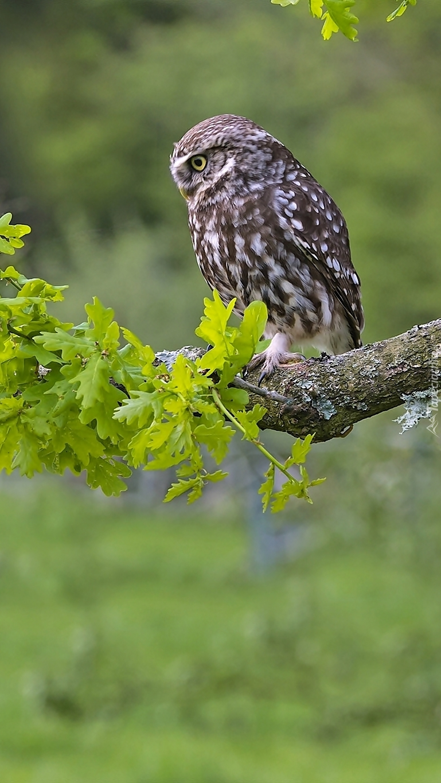 Pójdźka na gałęzi