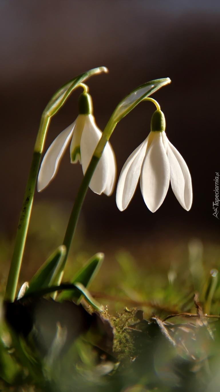Pokłon wiosny
