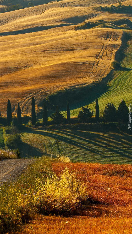 Pola i droga w Toskanii