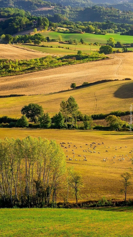 Pola i łąki na wzgórzach