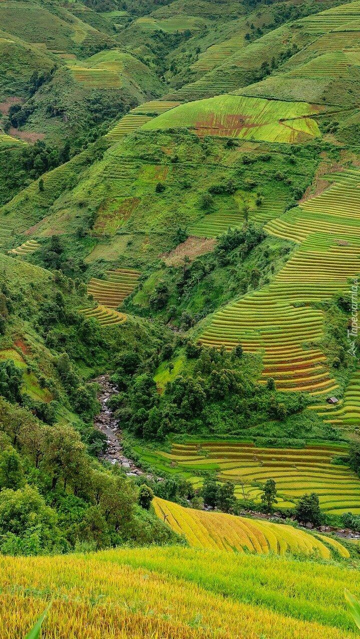 Pola ryżowe na wzgórzach