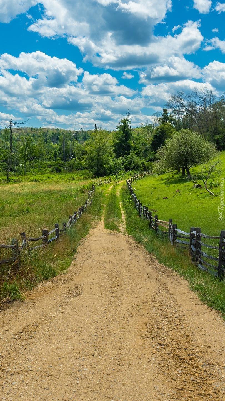 Polna droga wśród zielonych łąk