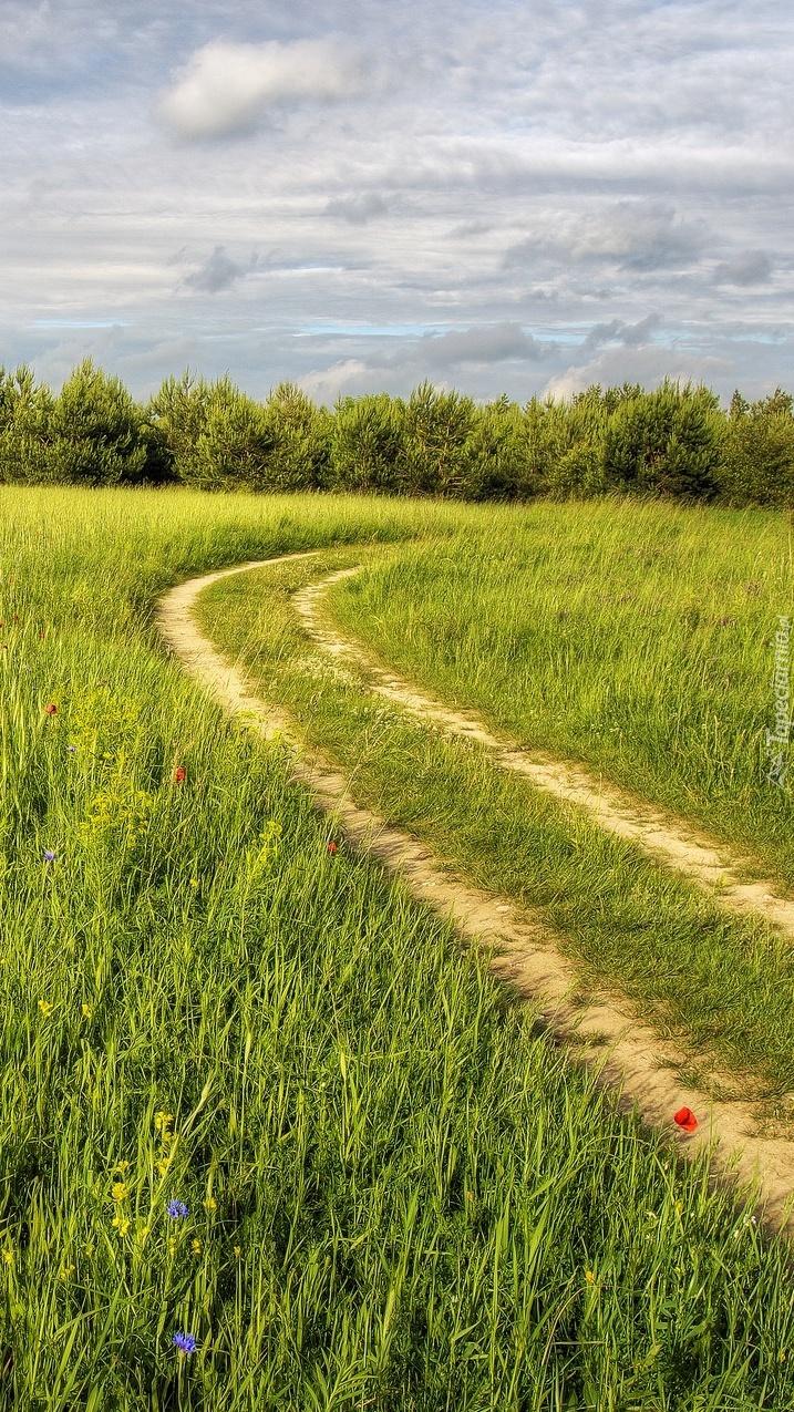 Polna ścieżka