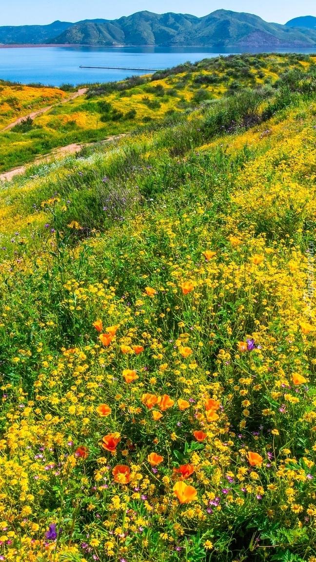 Polne kwiaty w dolinie Diamond Valley