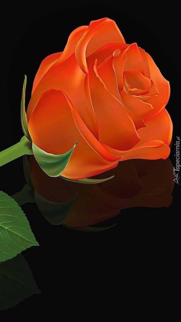 Pomarańczowa róża
