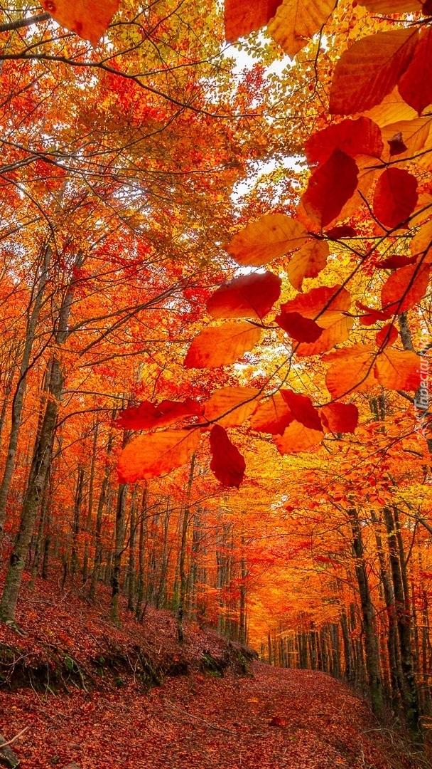 Pomarańczowe drzewa w lesie