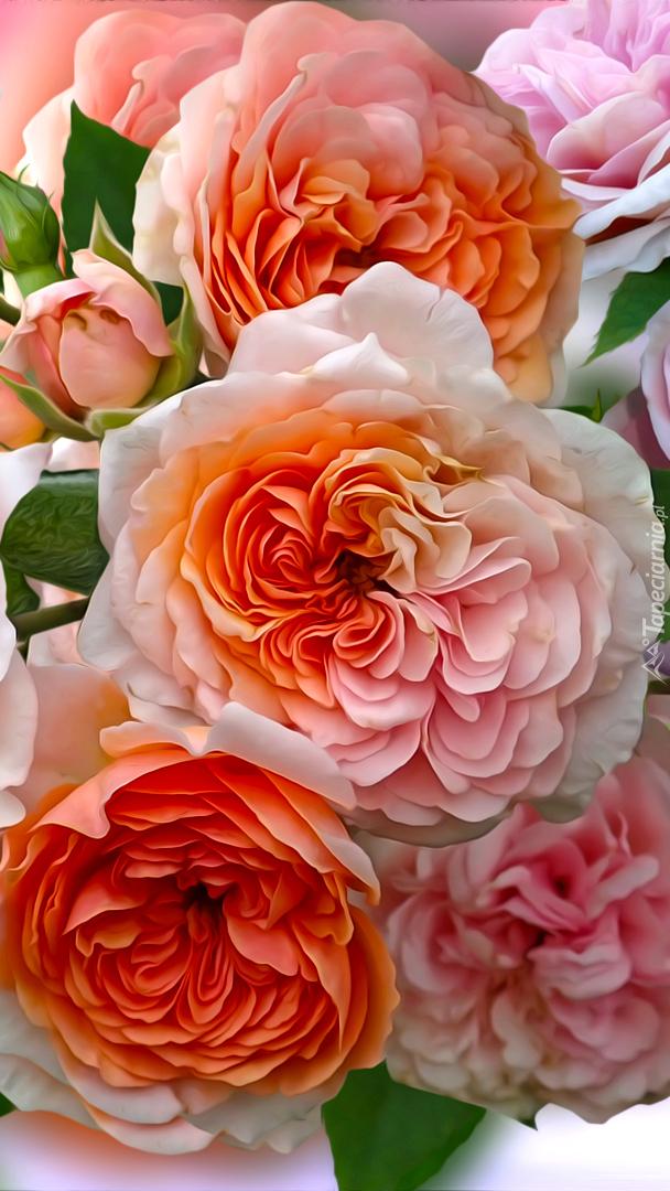 Pomarańczowe róże w grafice