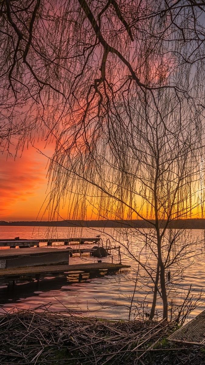 Pomost pod drzewem na jeziorze
