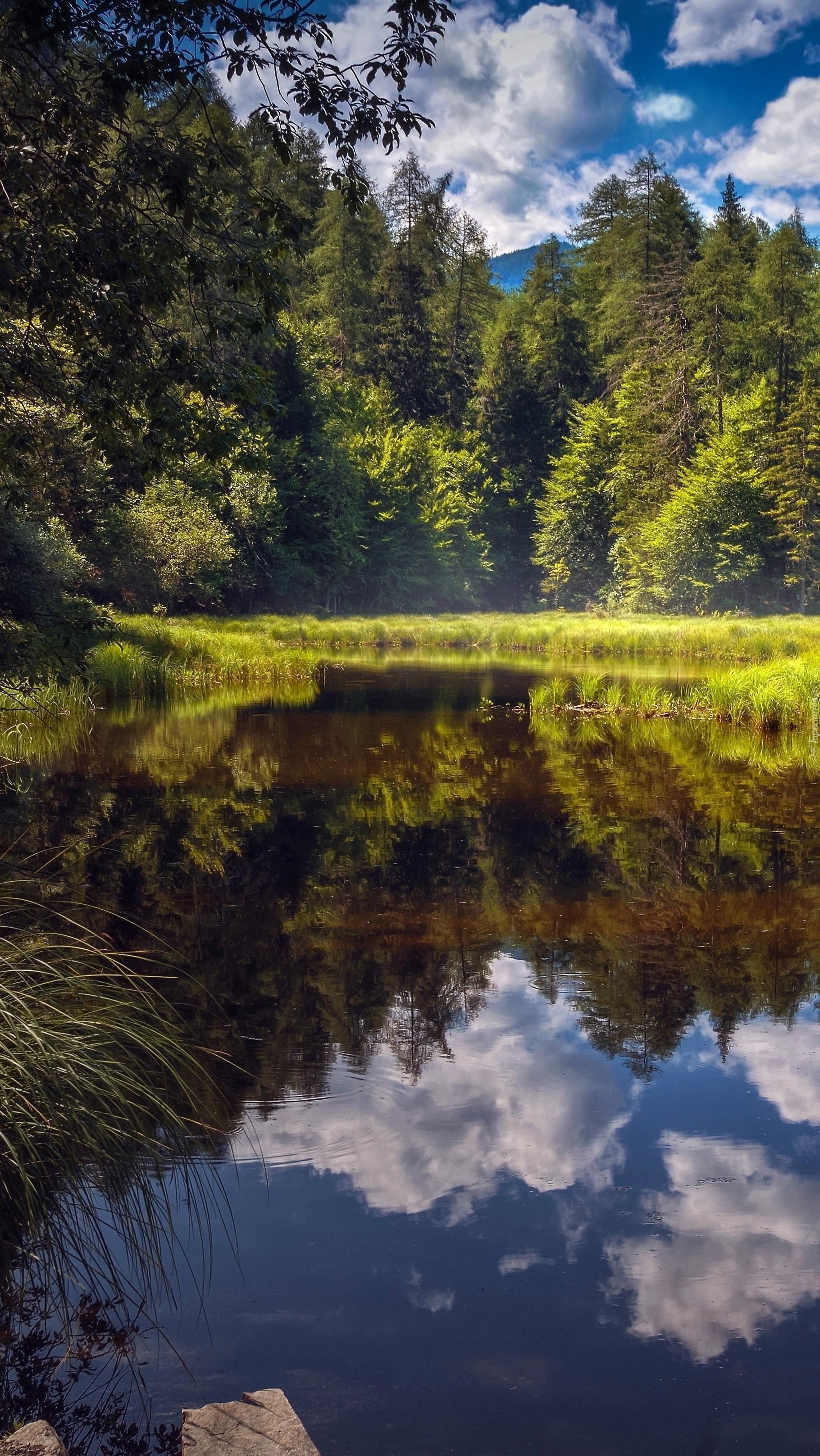 Poranek nad leśnym stawem