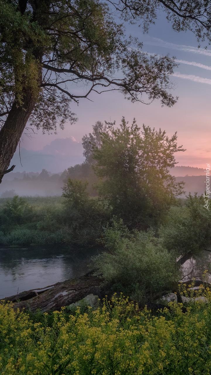 Poranek nad rzeką Istra
