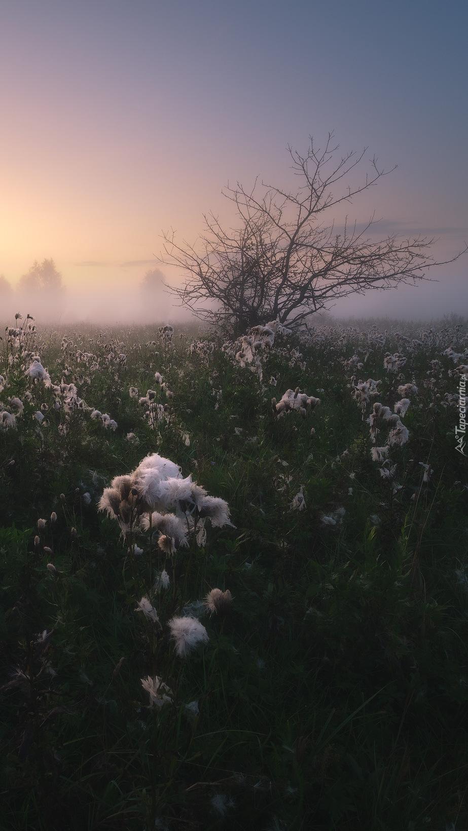 Poranek nad zamgloną łąką