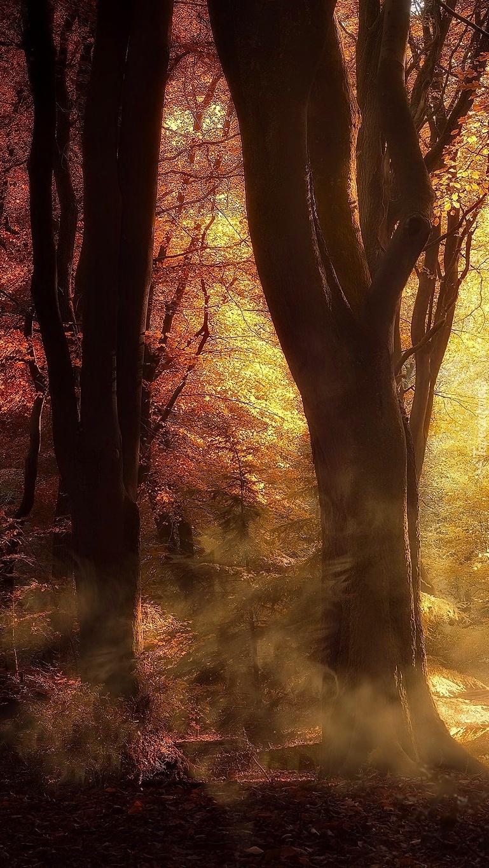Poranek w jesiennym lesie