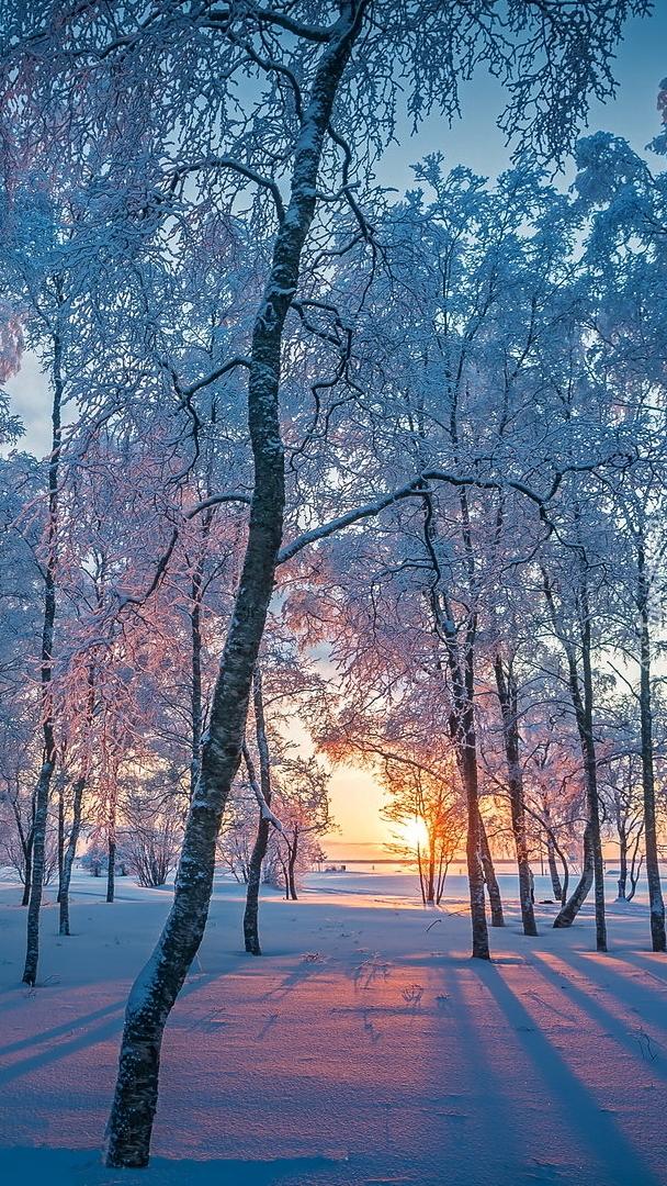 Poranek w ośnieżonym lesie
