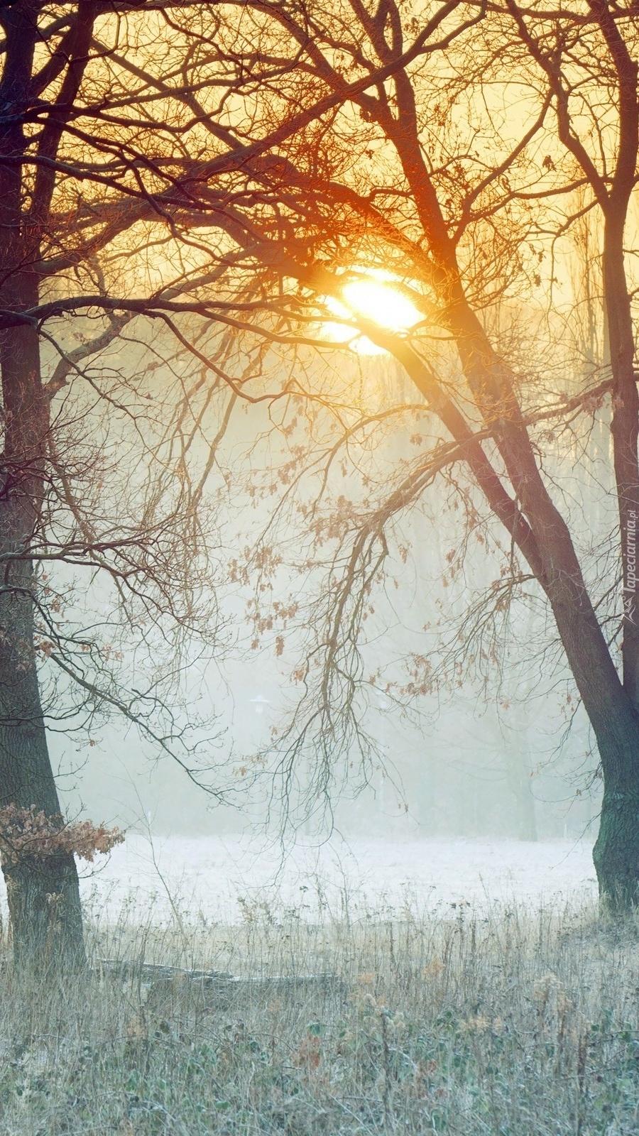 Poranek w zamglonym lesie