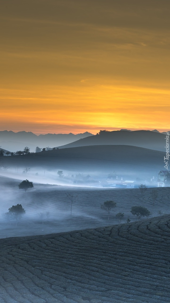 Poranna mgła nad polami