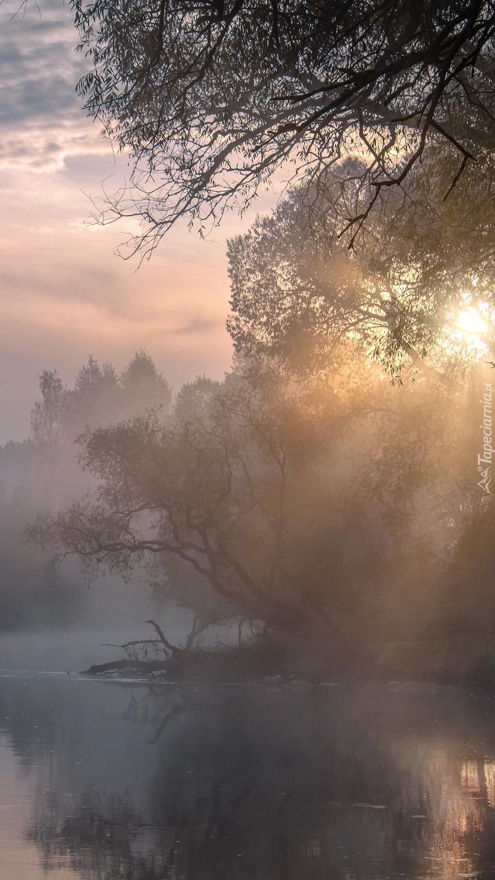 Poranna mgła nad rzeką