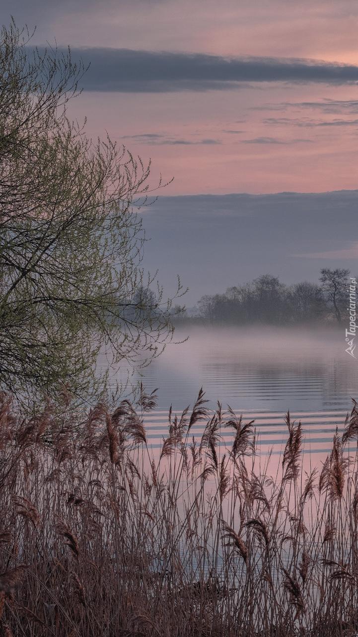 Poranna mgła nad rzeką Dubna