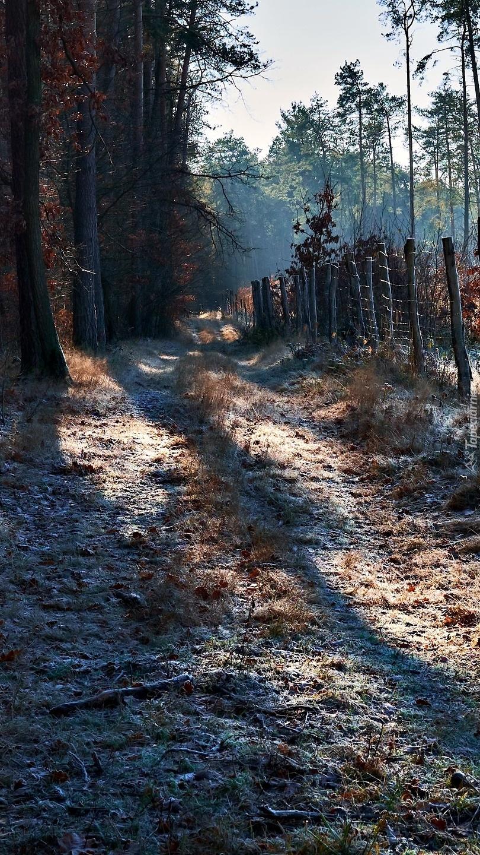 Poranny przymrozek na leśnej drodze
