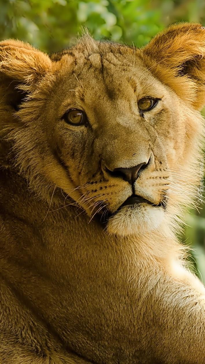 Portret samotnej lwicy