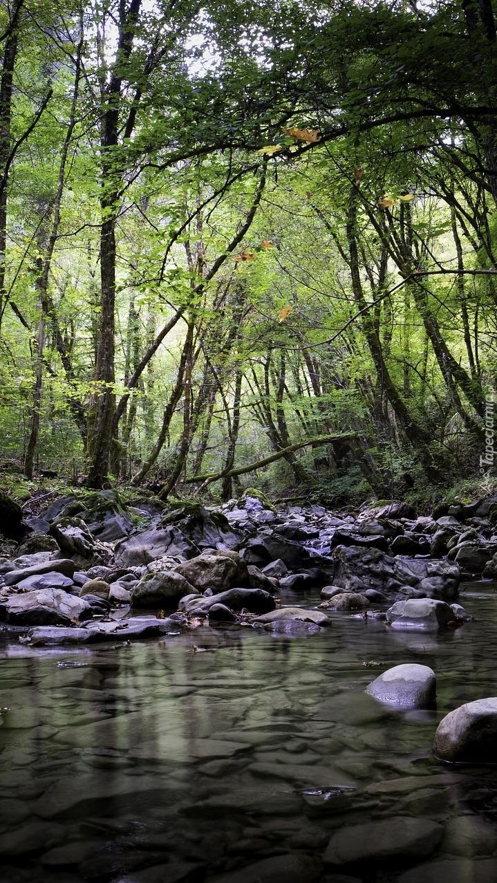 Potok między drzewami