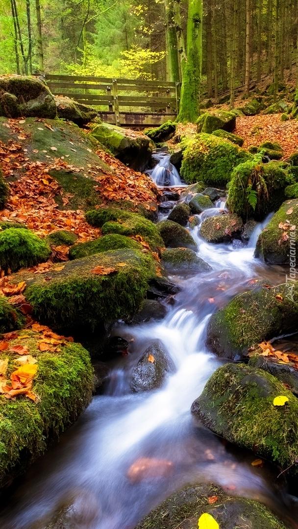 Potok w jesiennym lesie
