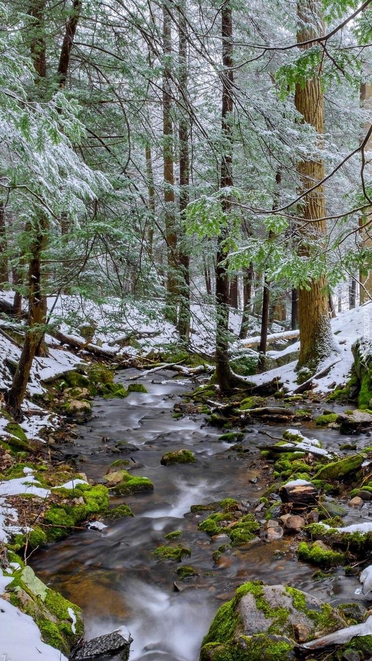 Potok w ośnieżonym lesie