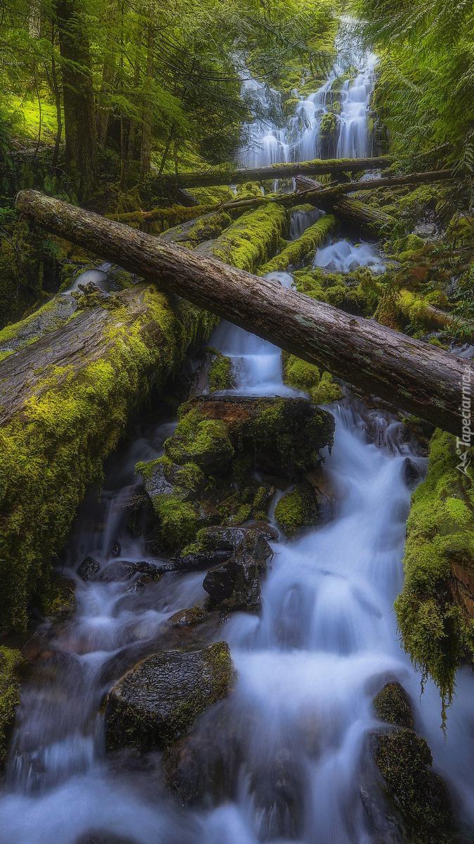 Powalone drzewa nad rzeką przy wodospadzie