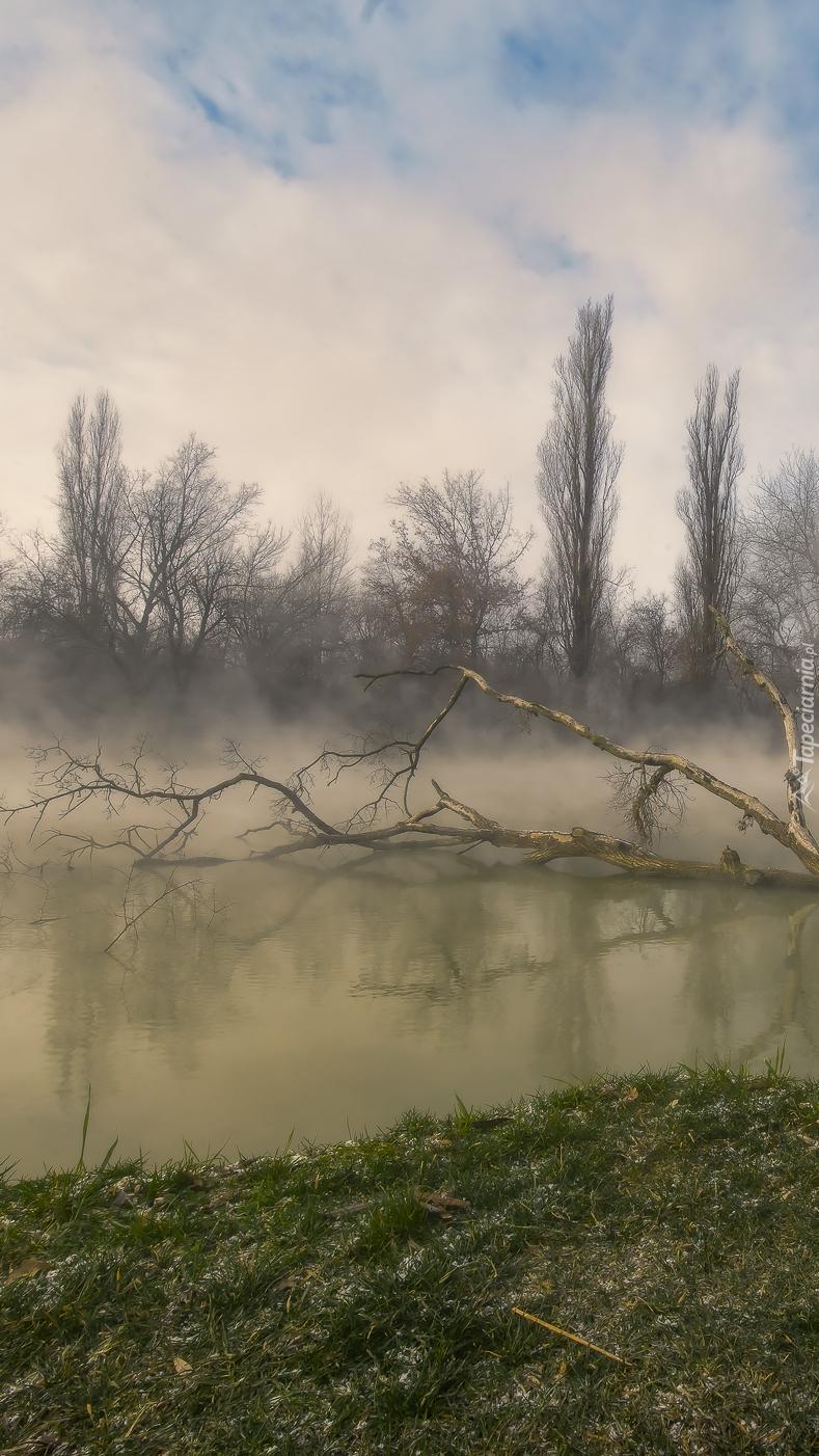 Powalone drzewo na rzece