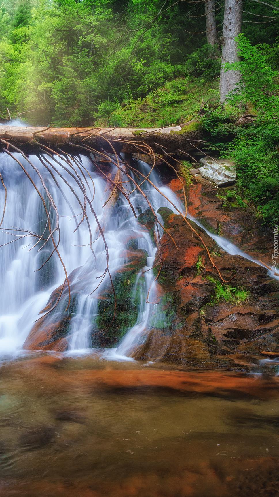 Powalone drzewo na wodospadzie