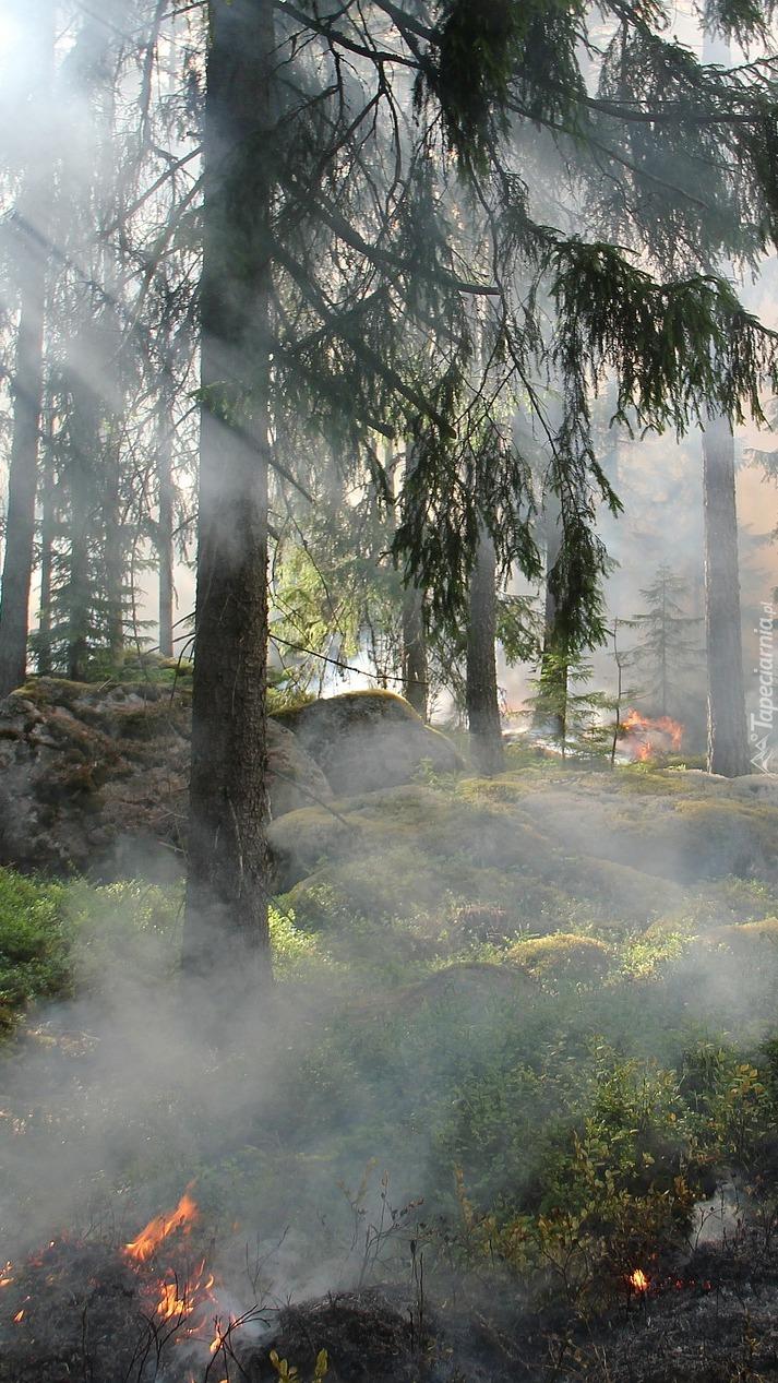 Pożar w lesie
