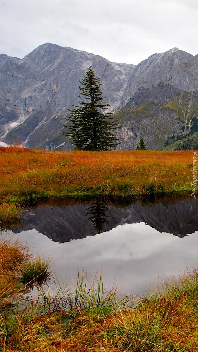 Pożółkła trawa wokół stawu w górach