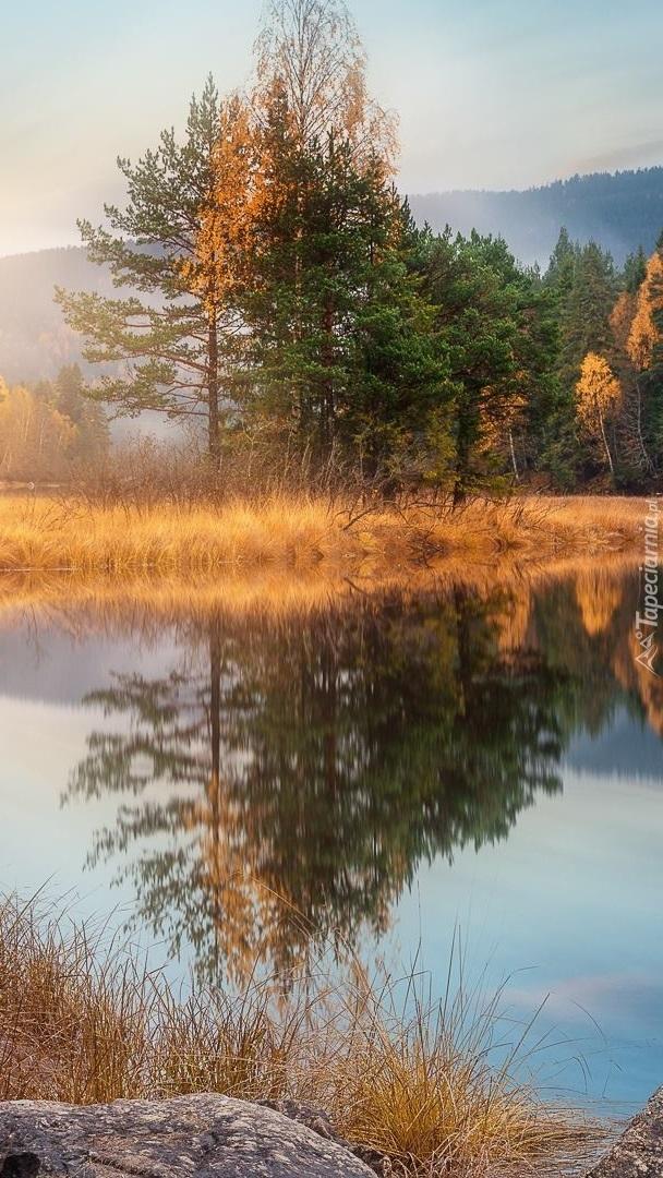 Pożółkłe drzewa i trawy nad jeziorem
