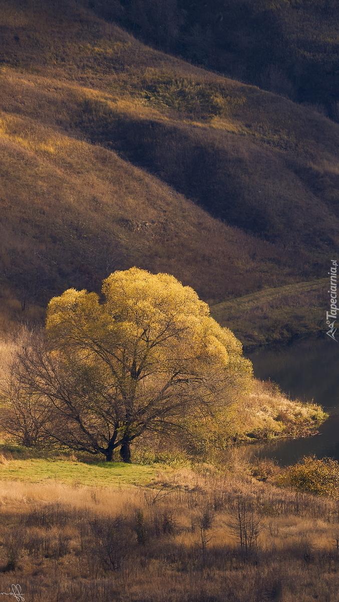 Pożółkłe drzewa nad rzeką