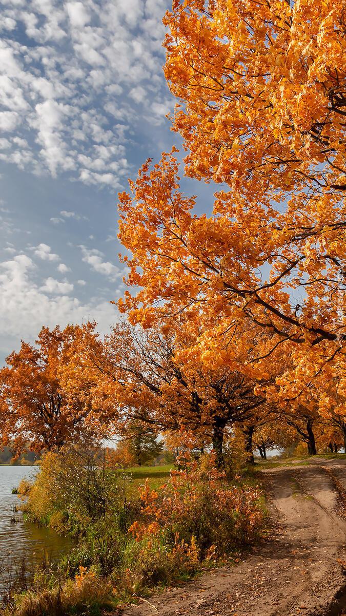 Pożółkłe drzewa przy drodze