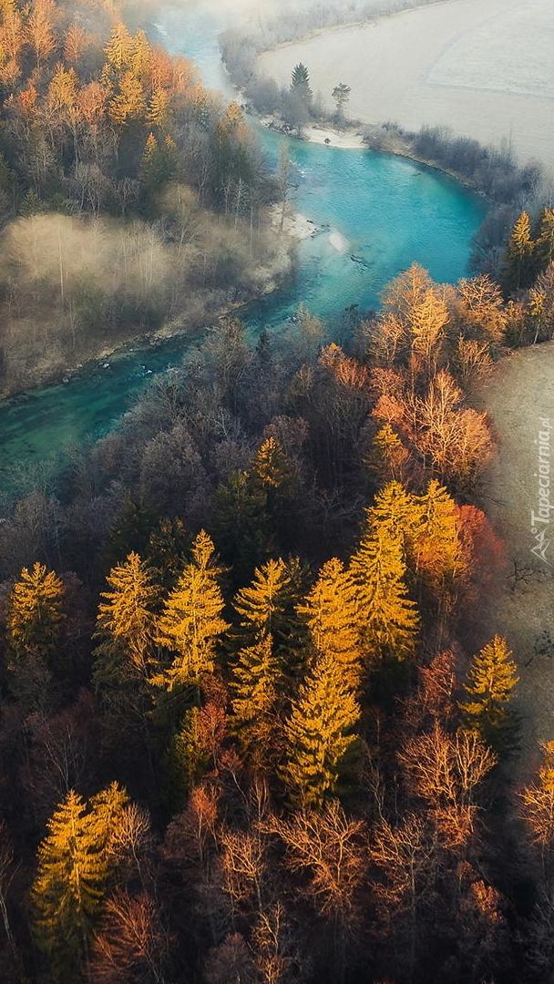 Pożółkłe drzewa wzdłuż rzeki Sava