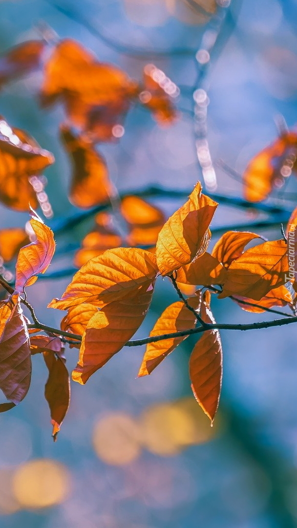 Pożółkłe liście na gałązce