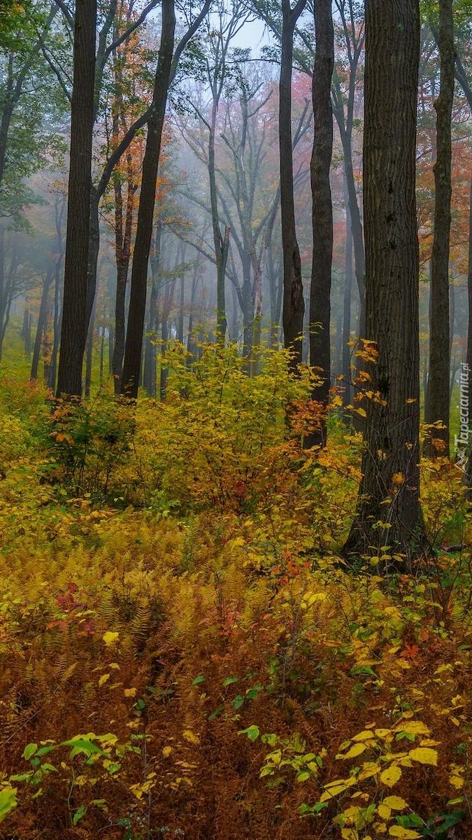 Pożółkłe rośliny w lesie